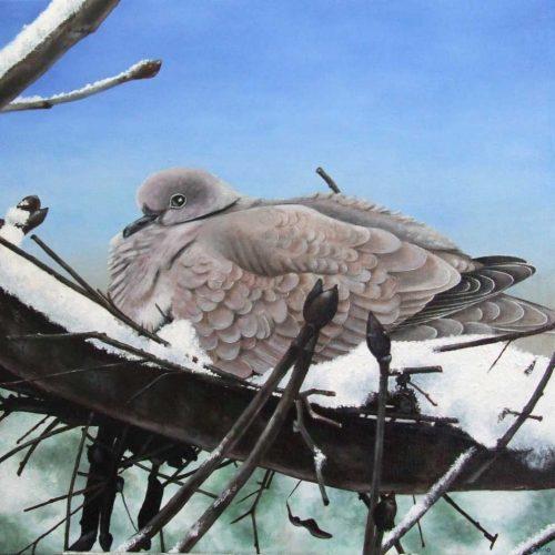 'Duif op nest in de sneeuw', olieverf, 60x60 cm