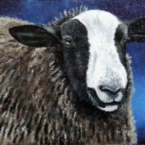 'Bruin schaap', olieverf, 18x27 cm